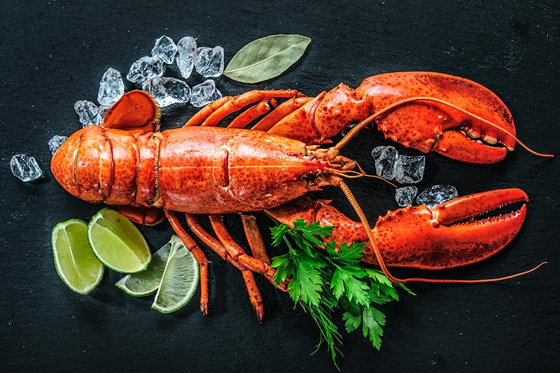 order fresh live lobsters london
